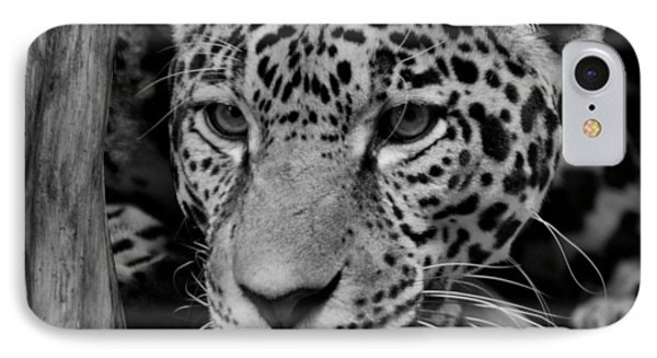Jaguar In Black And White II Phone Case by Sandy Keeton