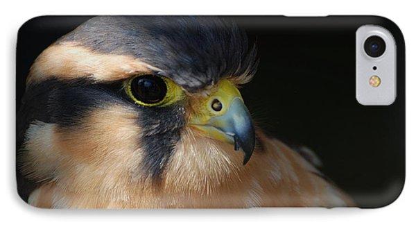 Kestrel Falcon IPhone Case by Amy Porter