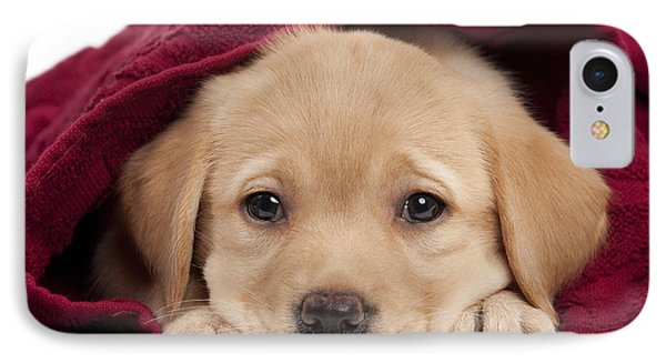Labrador Puppy In Towel IPhone Case by Jean-Michel Labat