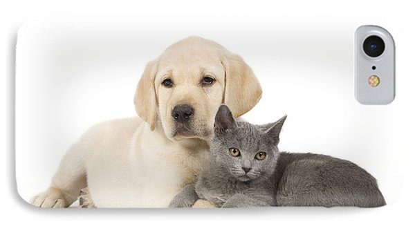 Labrador Puppy With Chartreux Kitten IPhone Case