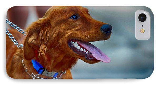 Labrador Retriever IPhone Case by Jerome Lynch