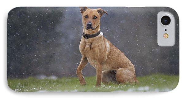 Labradormalinois Mix IPhone Case
