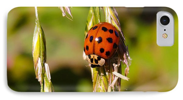 IPhone Case featuring the tapestry - textile Lady Bug by Dennis Bucklin