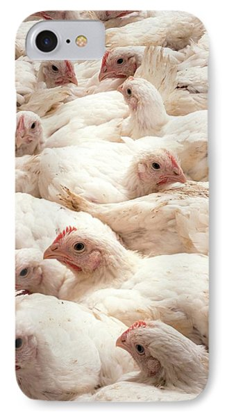 Large Number Of Hens In A Barn IPhone Case by Aberration Films Ltd