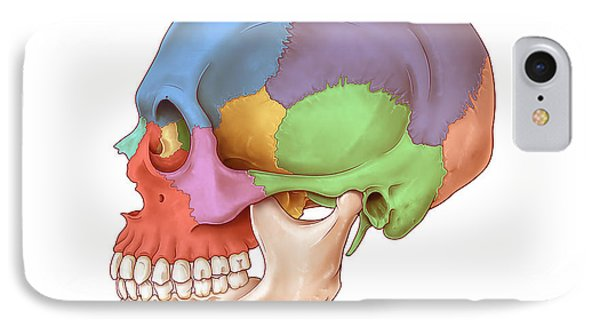 Lateral Skull, Illustration IPhone Case