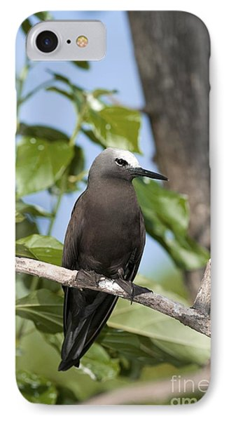 Lesser Noddy In A Tree IPhone Case by Tony Camacho
