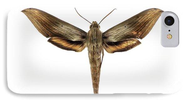 Libya Sphinx Moth IPhone Case by F. Martinez Clavel