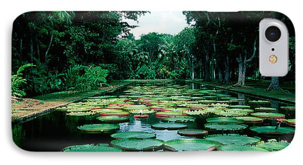 Lily Pads Floating On Water IPhone Case