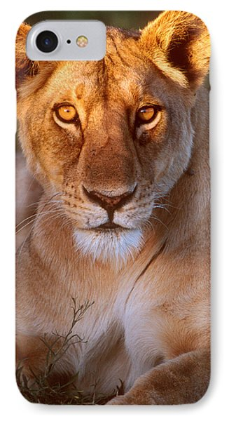 Lioness Tanzania Africa IPhone Case by Panoramic Images