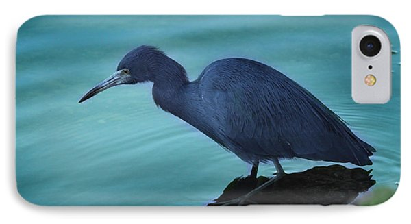 Little Blue Heron IPhone Case by Joseph G Holland
