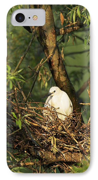 Little Egret (egretta Garzetta IPhone Case by Martin Zwick