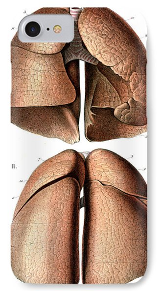 Lung Anatomy IPhone Case by Collection Abecasis