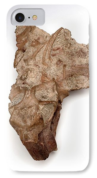 Lystrosaurus Fossil IPhone Case by Ucl, Grant Museum Of Zoology