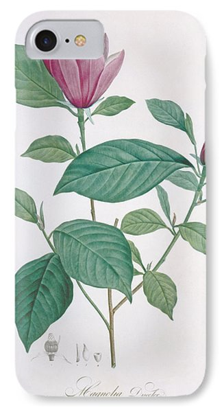 Magnolia Discolor, Engraved By Legrand IPhone Case