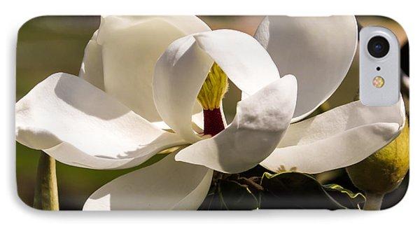 Magnolia IPhone Case by Zina Stromberg