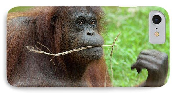 Malaysia, Borneo, Sabah, Kota Kinabalu IPhone 7 Case by Cindy Miller Hopkins