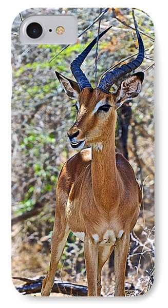 Male Impala In Kruger National Park-south Africa   IPhone Case