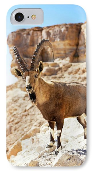 Male Nubian Ibex IPhone Case by Photostock-israel