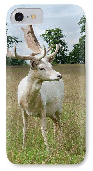 Male White Fallow Deer IPhone Case by Nigel Downer