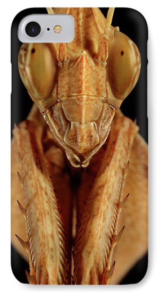 Mantis (gongylus Sp.) Head IPhone Case by Tomasz Litwin