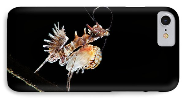 Mantis Nymph IPhone Case by Melvyn Yeo
