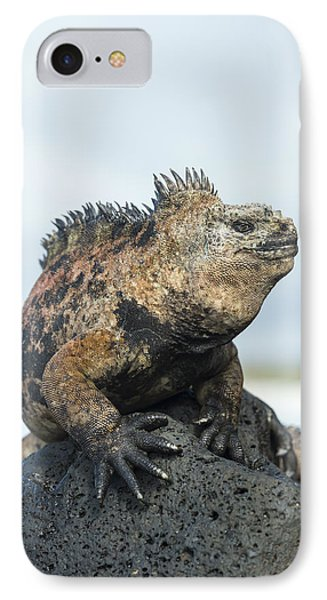 Marine Iguana Male Turtle Bay Santa IPhone Case by Tui De Roy