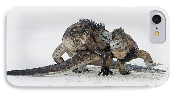 Marine Iguana Males Fighting Turtle Bay IPhone Case by Tui De Roy