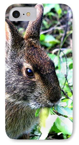 Marsh Rabbit IPhone Case