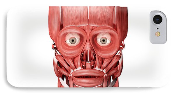 Medical Illustration Of Male Facial Phone Case by Stocktrek Images