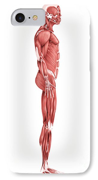 Medical Illustration Of Male Muscular Phone Case by Stocktrek Images