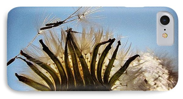 #mgmarts #dandelion IPhone Case
