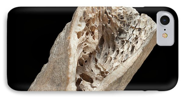 Moa Bone Fragment IPhone Case by Natural History Museum, London