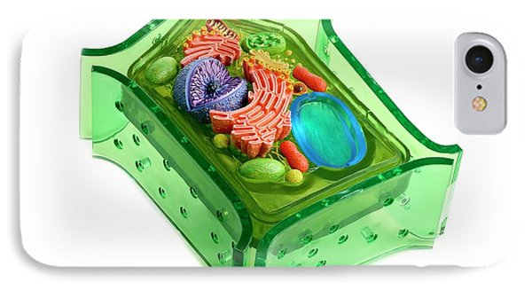 Model Of A Plant Cell IPhone Case