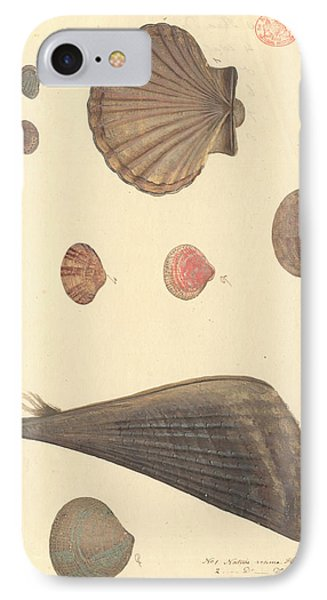 Molluscs IPhone Case by Natural History Museum, London