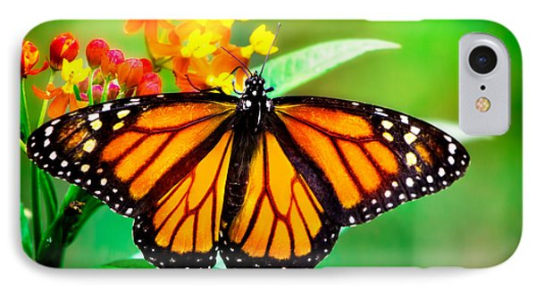 Monarch Butterfly IPhone Case by Mark Andrew Thomas
