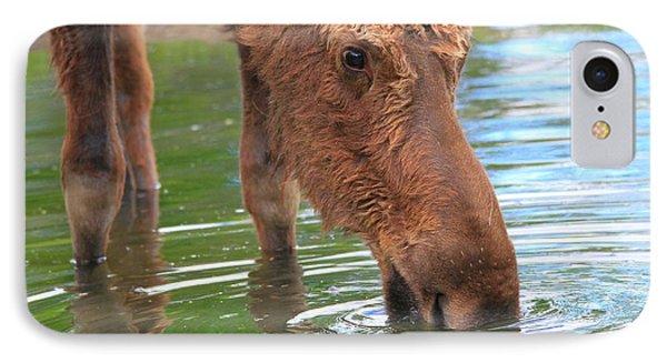 Moose In Water IPhone Case