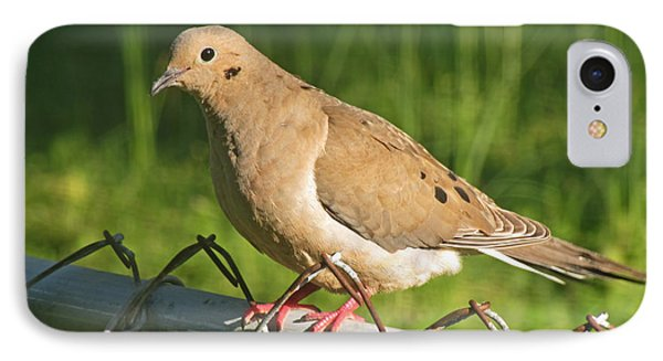 Morning Dove I IPhone Case by Debbie Portwood