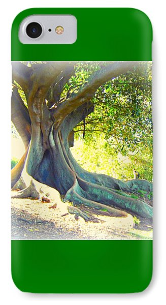 Morton Bay Fig Tree IPhone Case by Leanne Seymour
