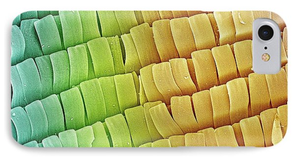 Moth Wing Scales IPhone Case by Petr Jan Juracka