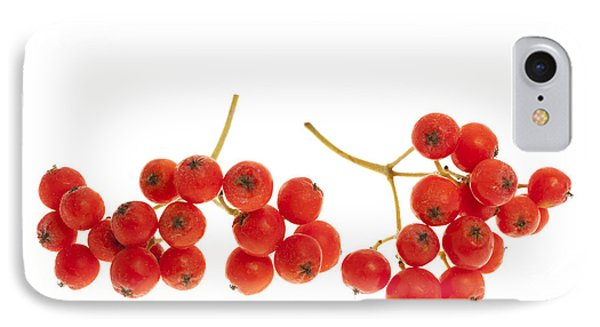 Mountain Ash Berries IPhone Case by Elena Elisseeva
