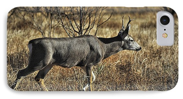 Mule Deer Buck IPhone Case