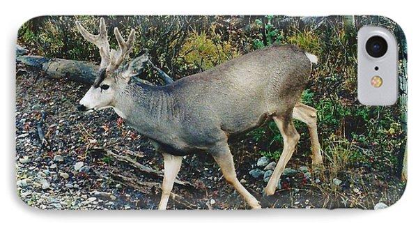 Mule Deer IPhone Case by D Hackett