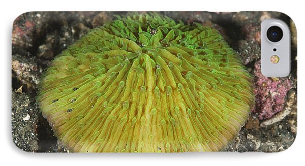 Mushroom Coral IPhone Case by Andrew J. Martinez