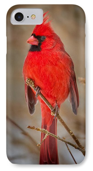 Northern Cardinal IPhone Case by Bill Wakeley
