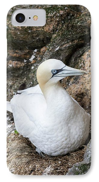 Northern Gannet (morus Bassanus IPhone Case