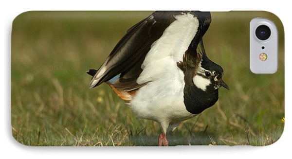 Lapwing iPhone 7 Case - Northern Lapwing by Helmut Pieper