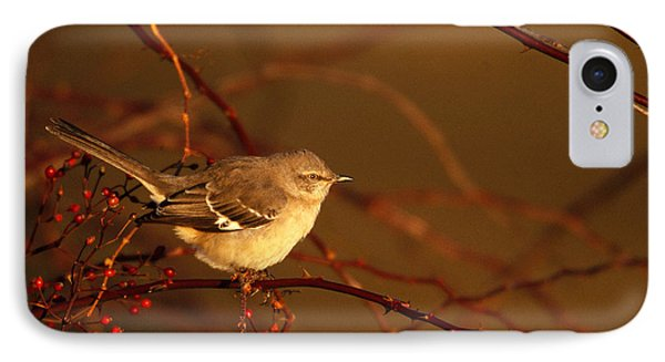 Northern Mockingbird Mimus Polyglottos IPhone 7 Case by Paul J. Fusco