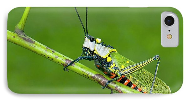 Northern Spotted Grasshopper IPhone 7 Case