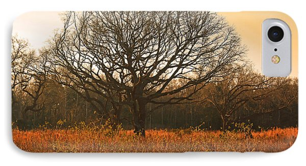 Oak Tree In A Field IPhone Case