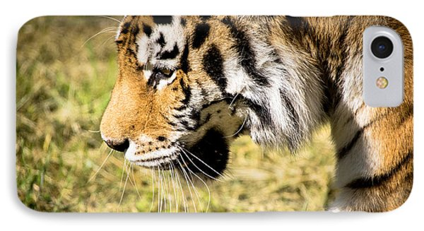 On The Prowl IPhone Case by Julie Clements